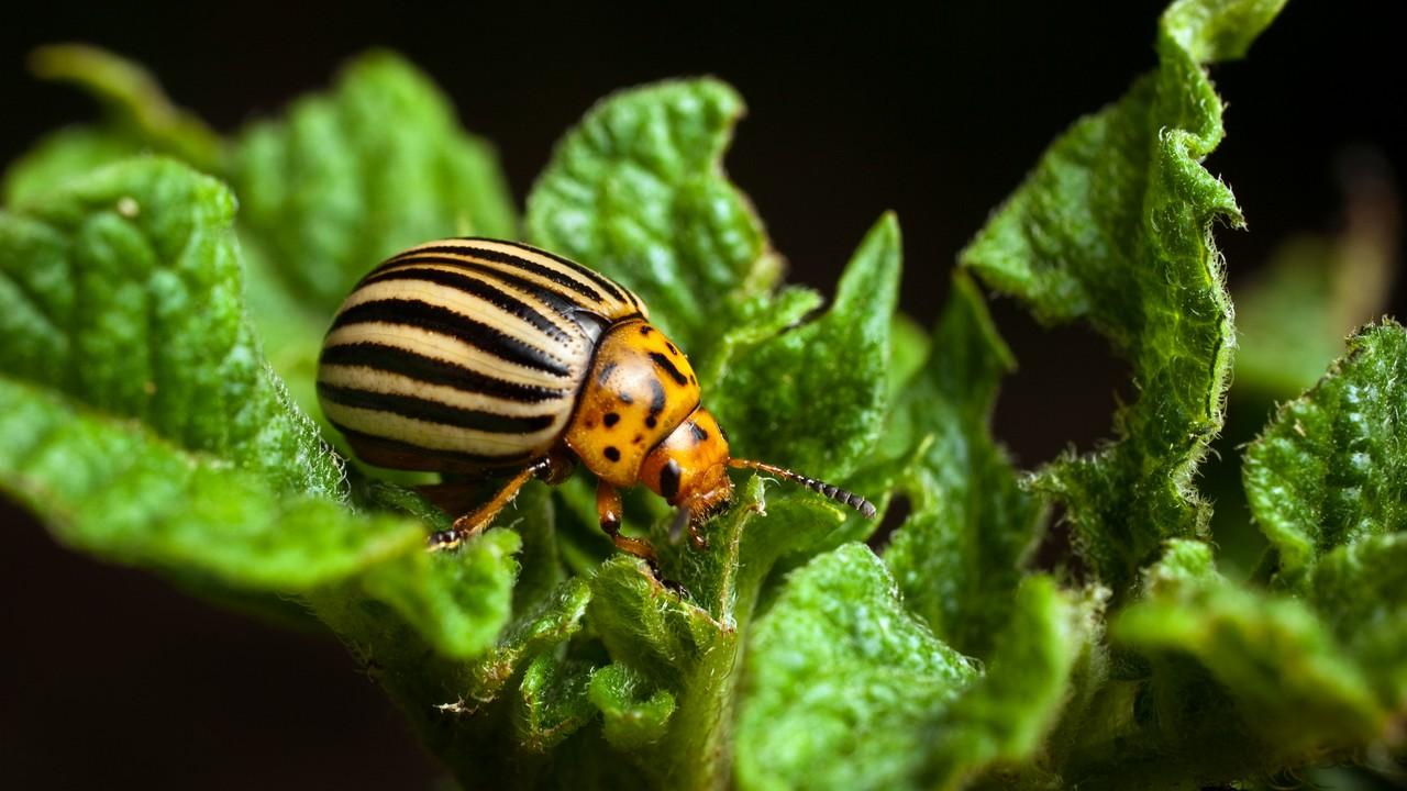 Kártevő rovarok a kertben