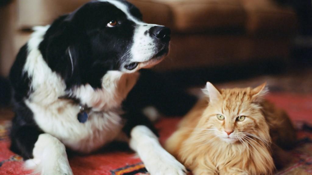 Féregtelenítés kutyáknak, macskáknak