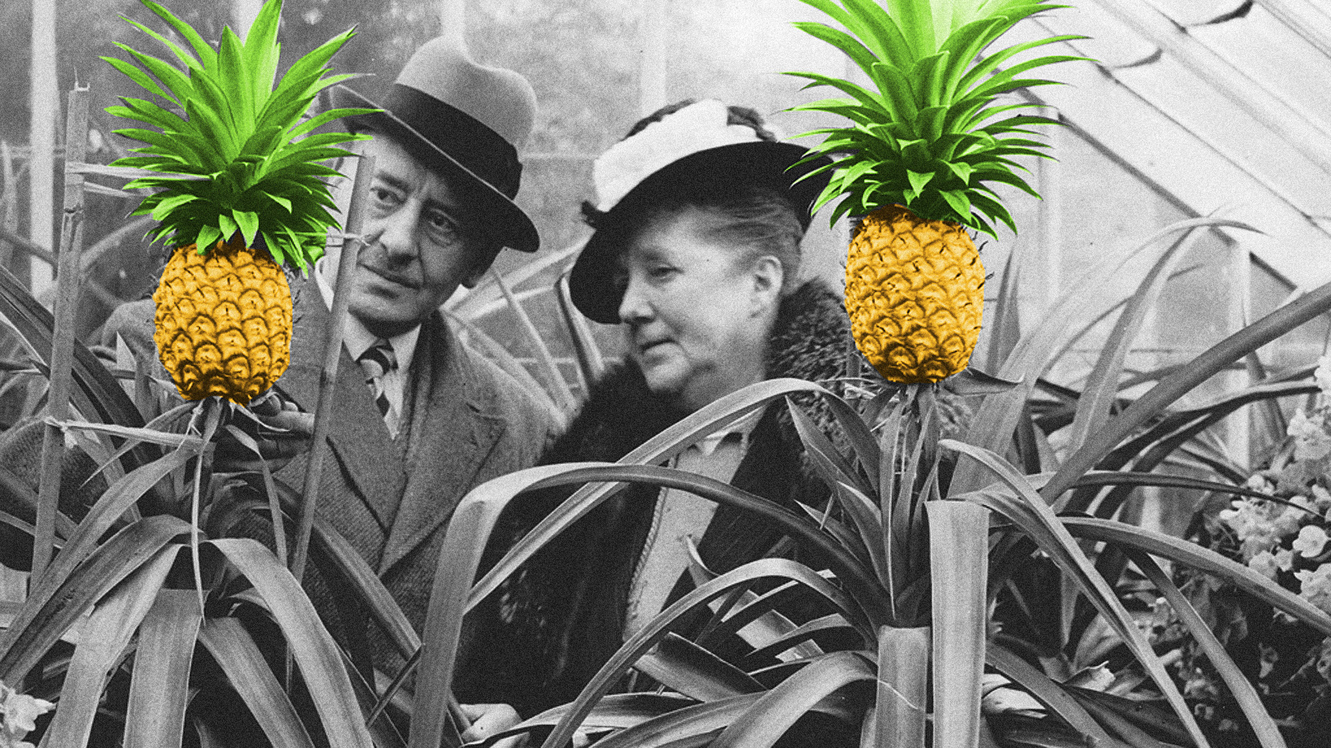 Volt idő, amikor úgy mutogatták az ananászt, mint egy drága műalkotást