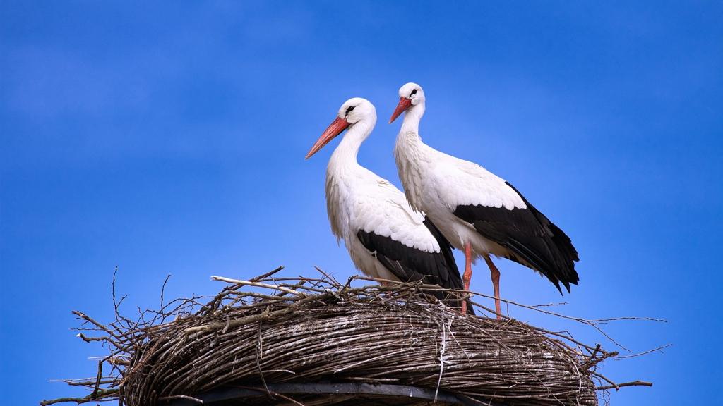 Odavannak a gólyák ezért a magyar községért