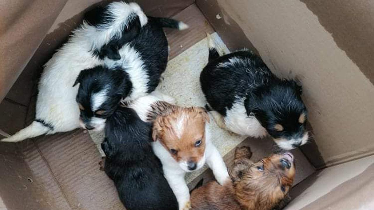 Kidobott kutyakölykök