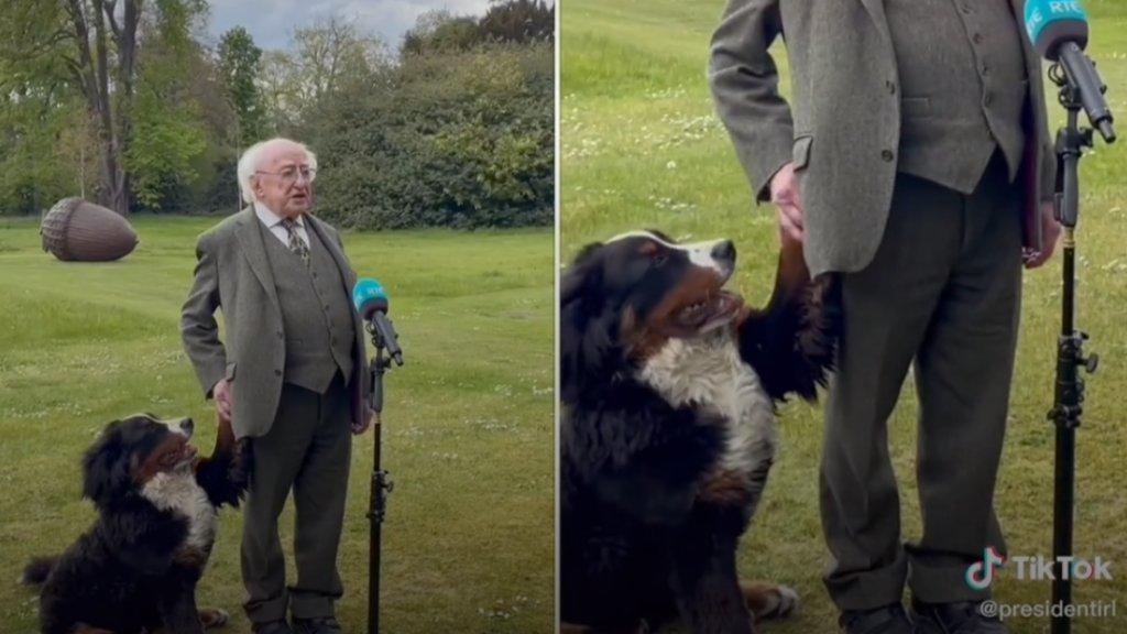 Ellopta a show-t az ír államfő kutyája