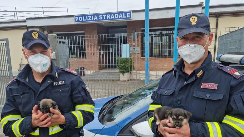 Leállították a forgalmat, hogy kimentsék az autópályáról a kutyakölyköket az olasz rendőrök