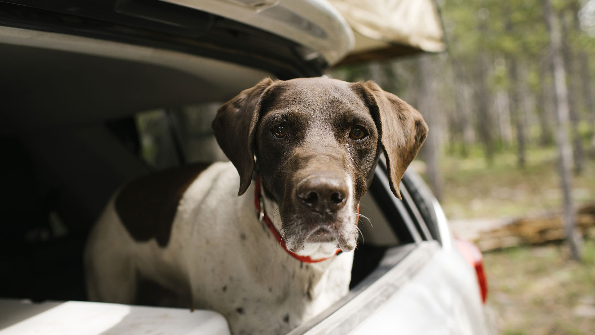 A róla szóló riport közben került elő az elveszett kutya