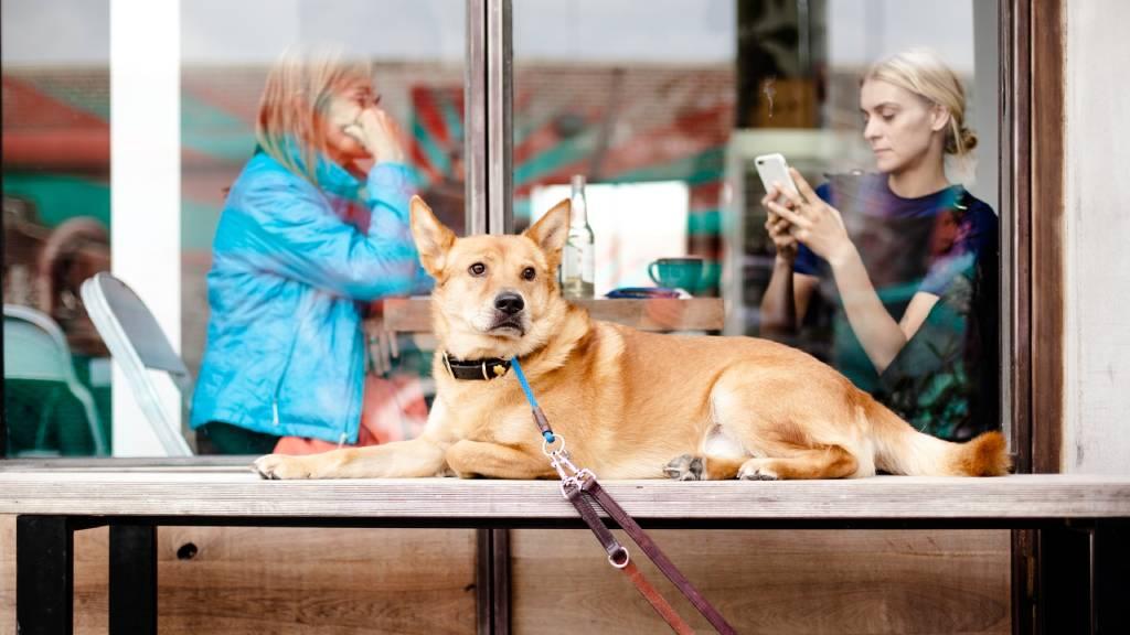 nő telefonoz a kutyája kikötve
