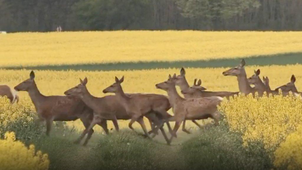 Szarvasrudli Kissomlyó határában