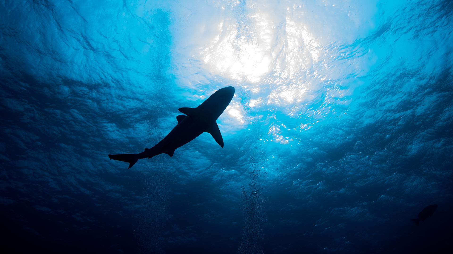 NFT-cápákkal segítheted az óceánok megmentését