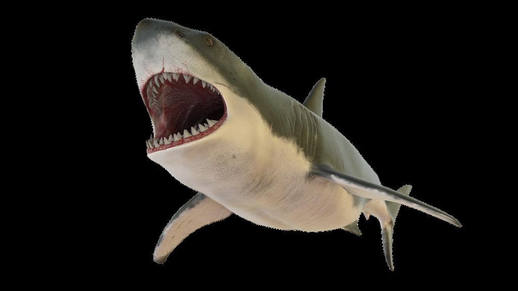A cápafogat nem lehet csak úgy eltenni Ausztráliában (fotó: Pixabay)