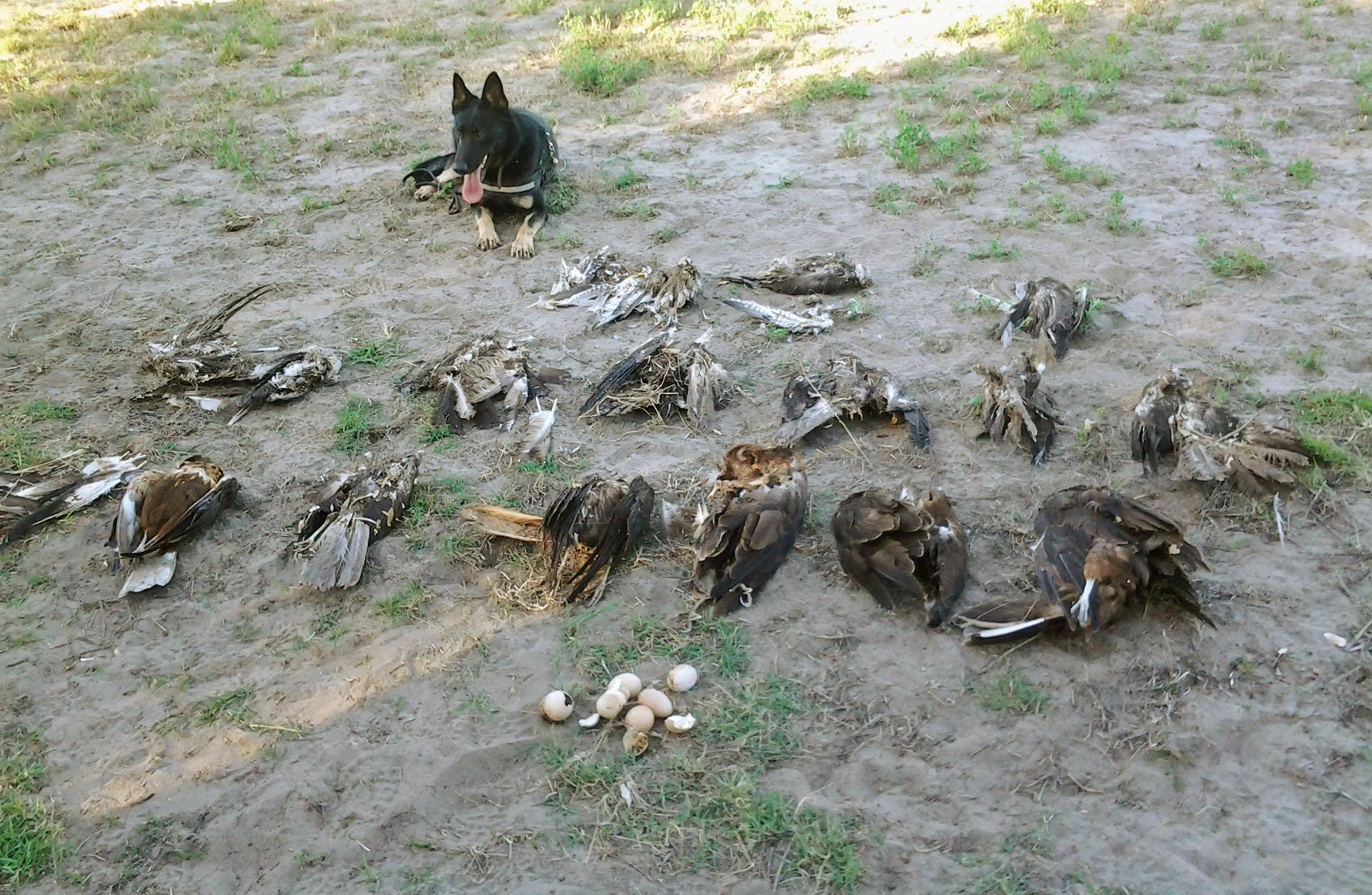 Így dolgoznak az MME méreg- és tetemkereső kutyái