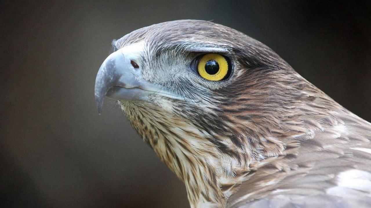 Különleges és ritka madár jelent meg Somogyban