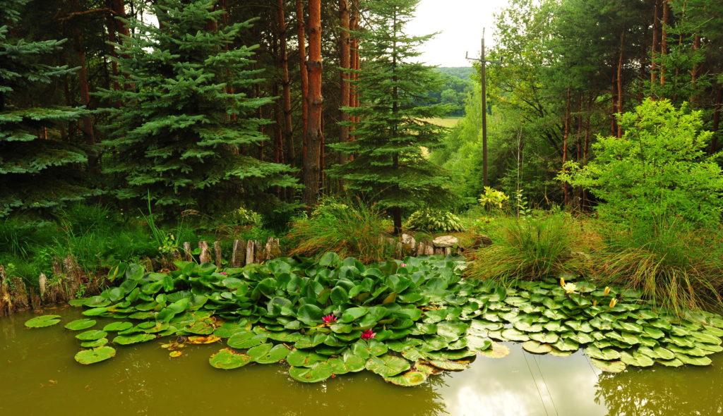 Kis tó tavirózsákkal a Kétvölgy Vendégháznál 2012-ben.