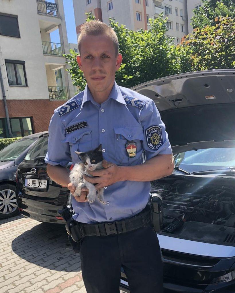 Kismacskát mentett a rendőr.