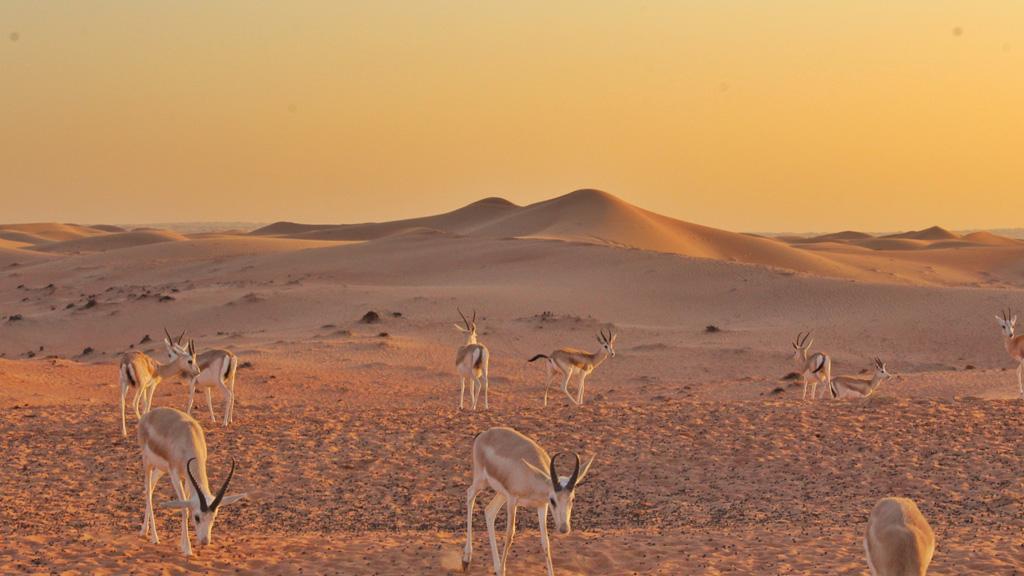 Végtelennek tűnő sivatagi táj / Fotó: Unsplash