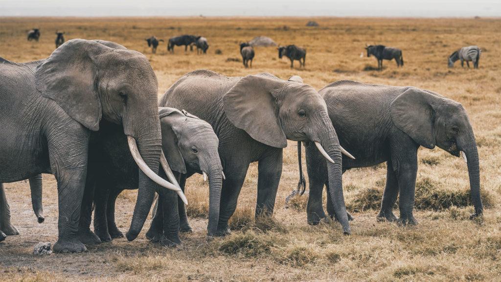 Ilyen cukin alvó elefántcsaládot még nem láttál