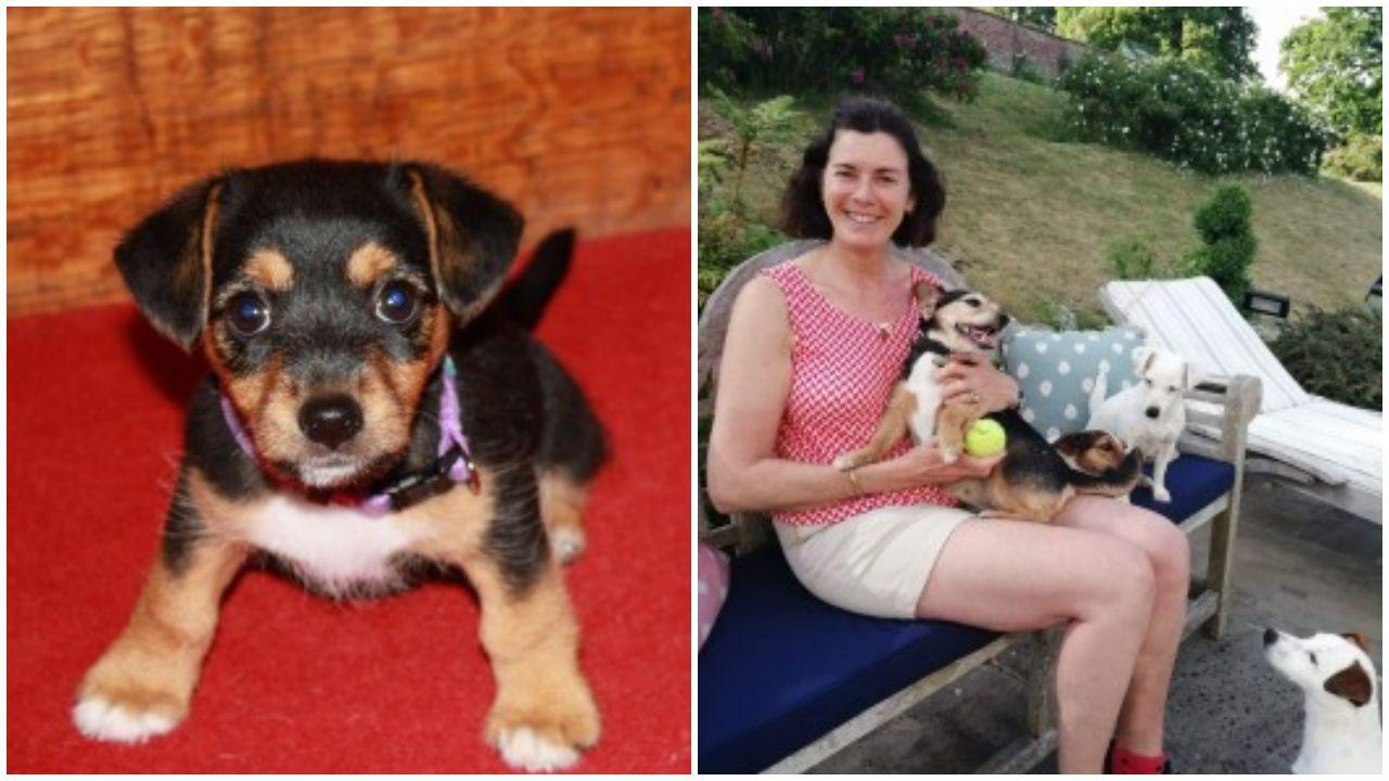 11 év után került elő a család kutyája