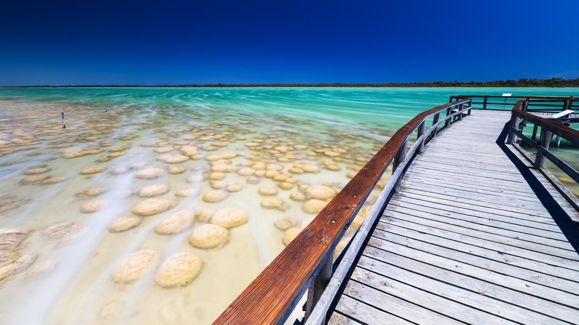 """Élő """"fosszíliák"""" az ausztrál tengerparton"""