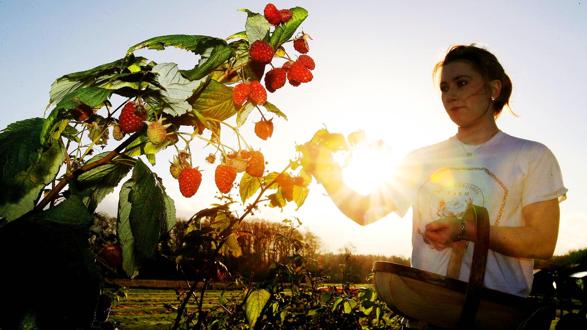 Klímaváltozás hatása a hazai gyümölcsökre