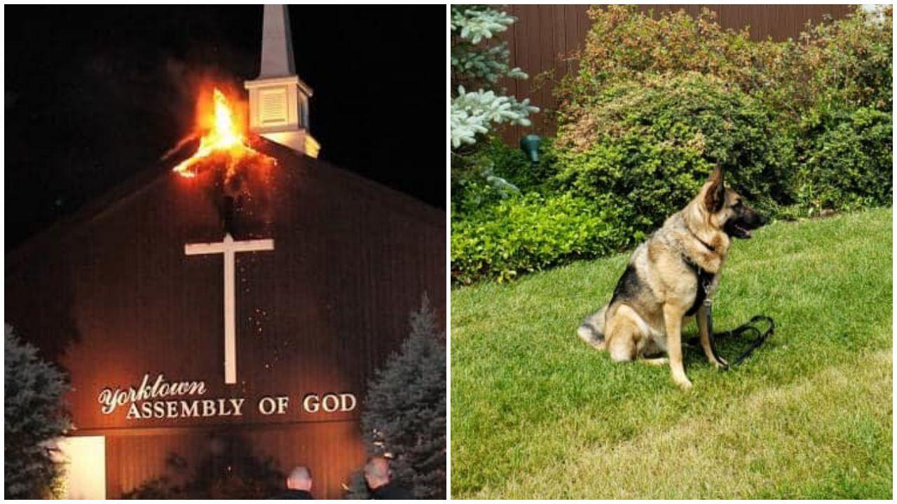 Megmentette a templomot a pusztulástól a hős kutya