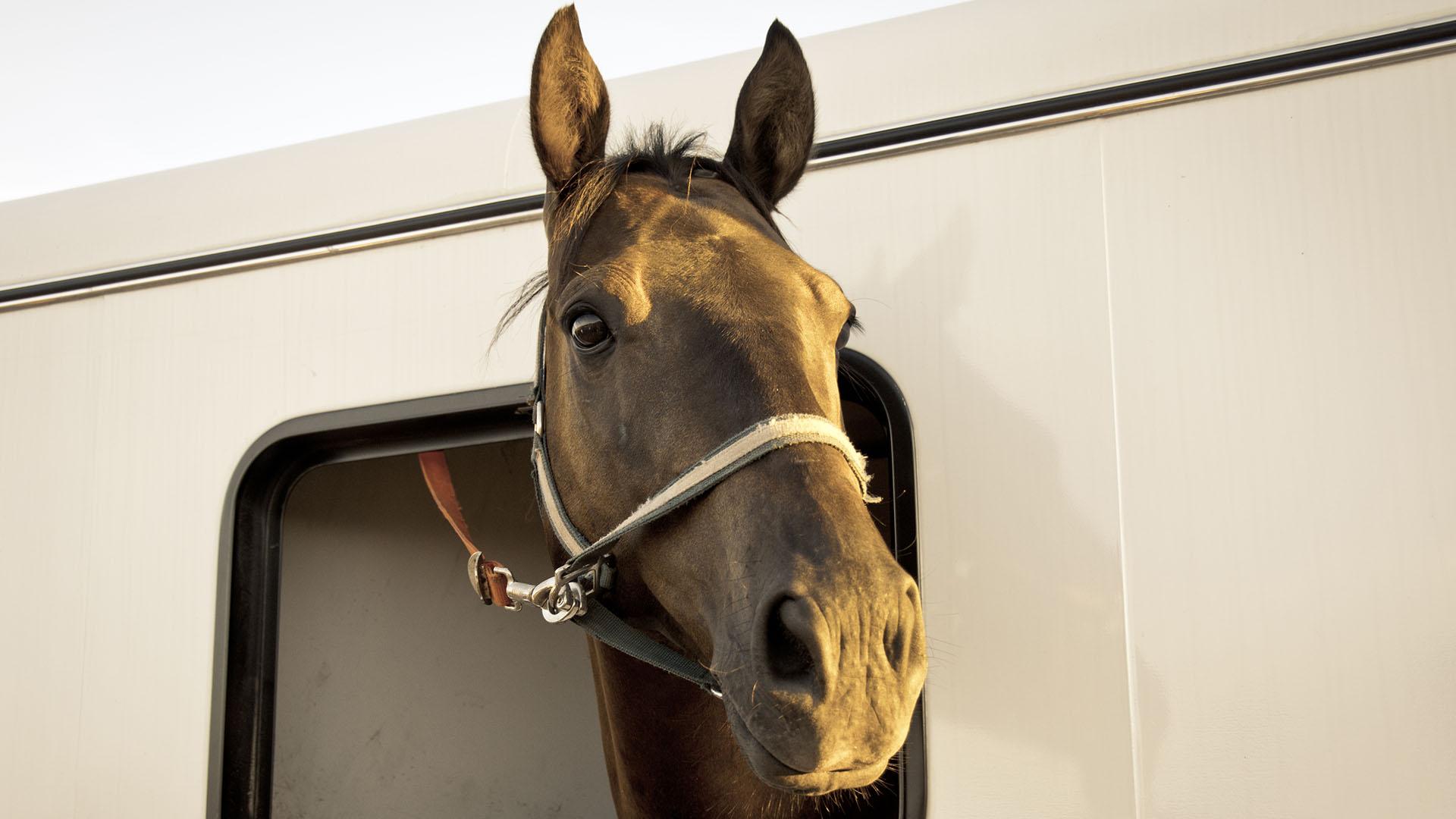 Költöznie kell a szombathelyi skanzen lovainak