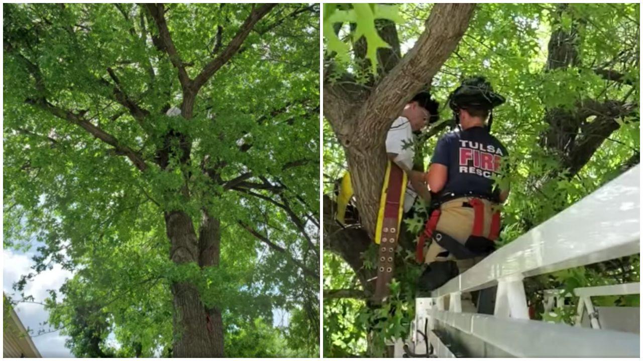 Macskamentés a fáról