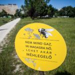 Méhlegelők a városban: érvek és ellenérvek