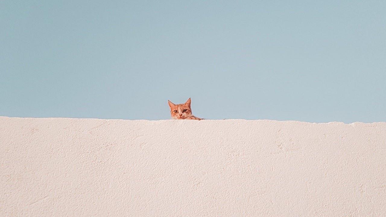 macska, örökbefogadás