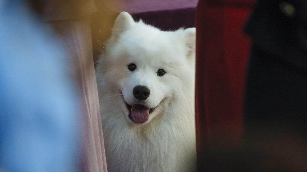 Egy hétig vándorolt a jégen a fehér kutya mielőtt megmentették