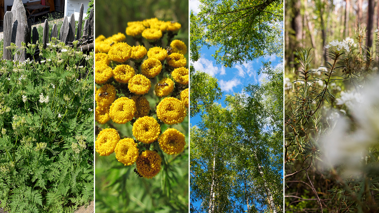 svédország növényei
