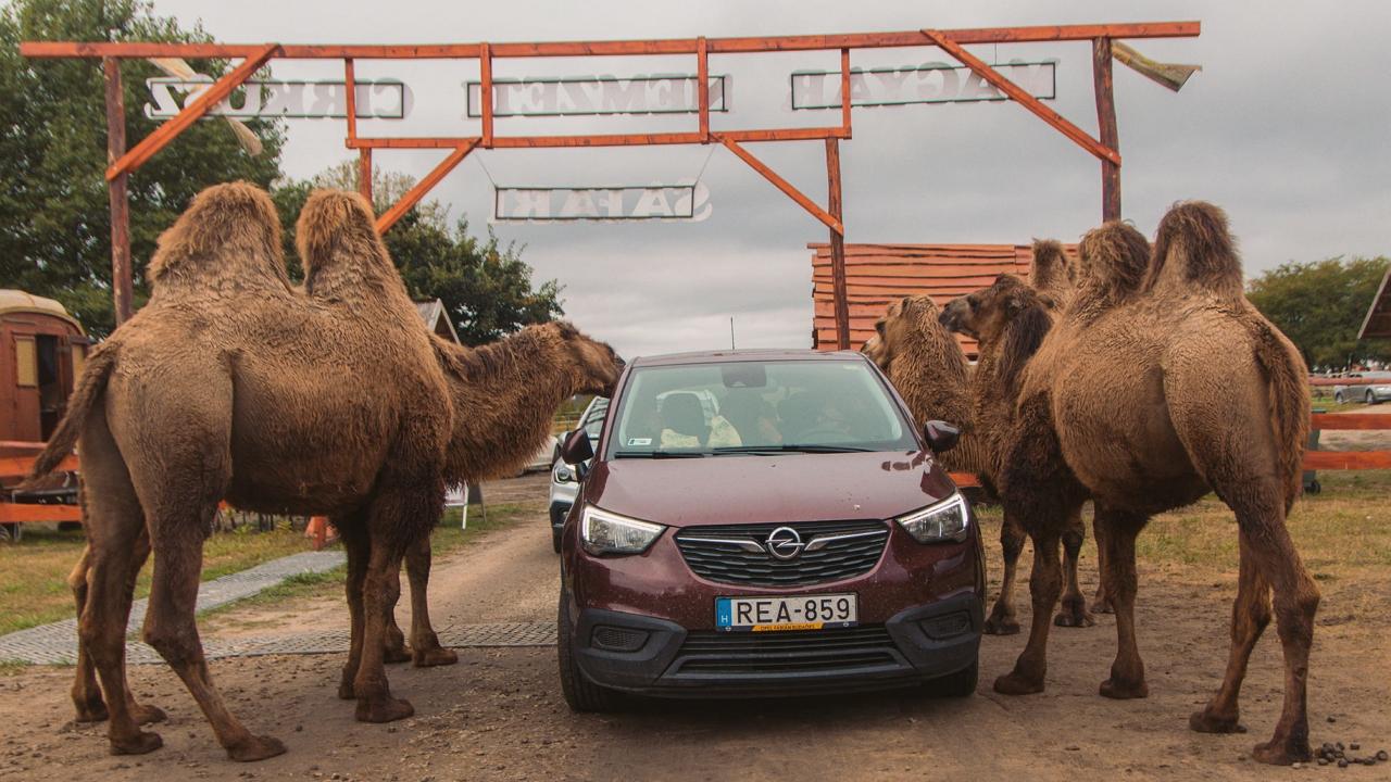 Több városban is szívesen látnák a nemrég bezárt Szadai Szafari Parkot