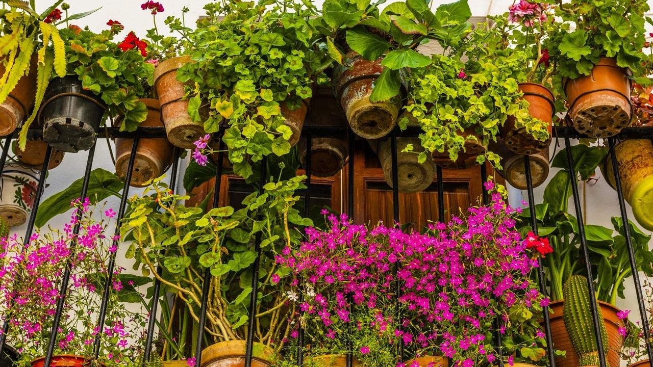 Kánikulatűrő növények