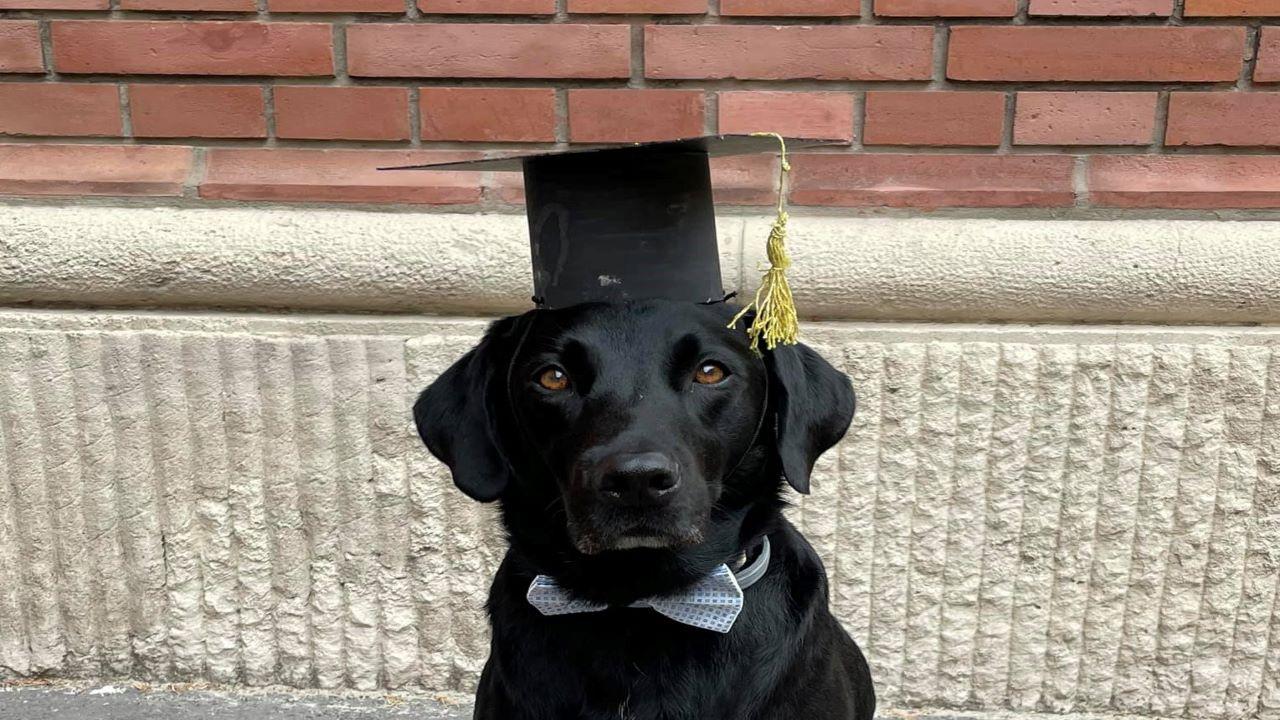 Fülöp, diploma, vakvezető