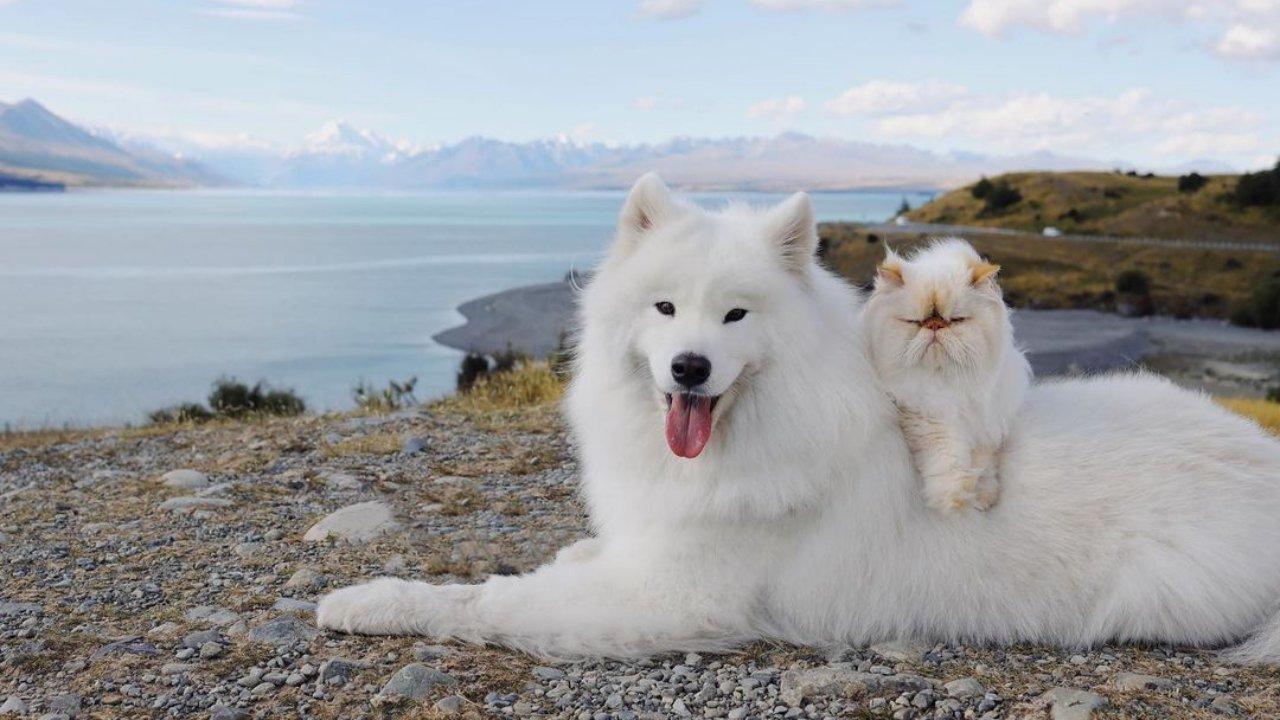 Imádja a net a mosolygós kutya és a zsémbes macska barátságát