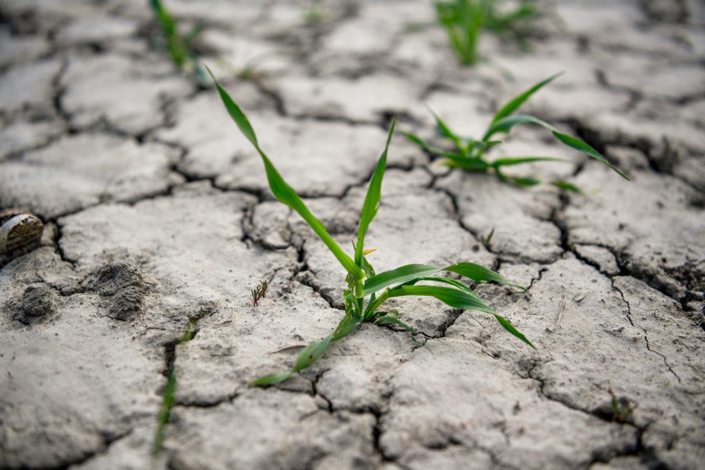 A vízhiány már az ajtónkon kopogtat, és mi is felelősek vagyunk