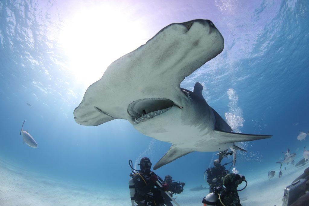 Tévedés, a cápáknak nem ránk fáj a foguk