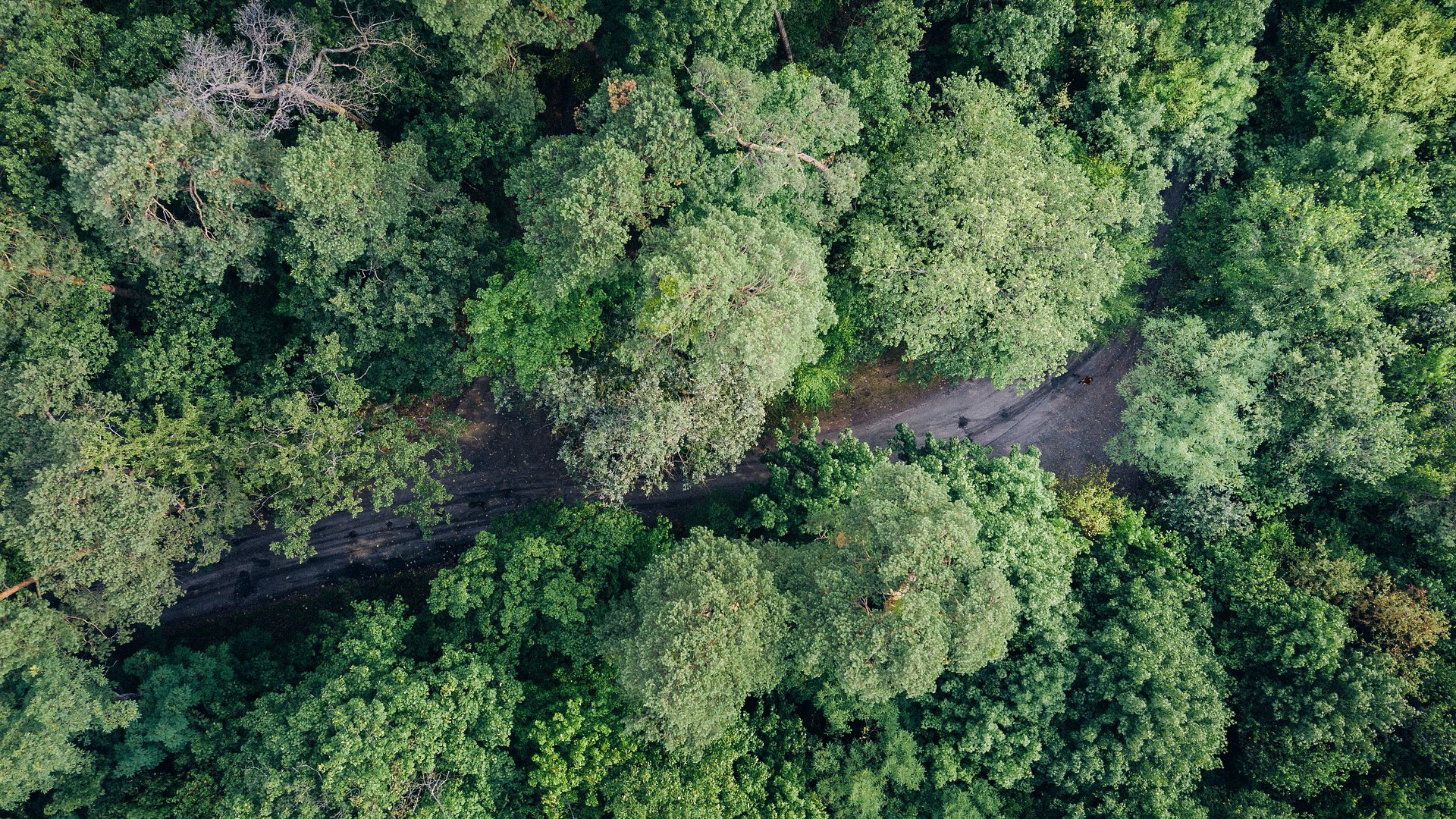 Erdő drónfotó