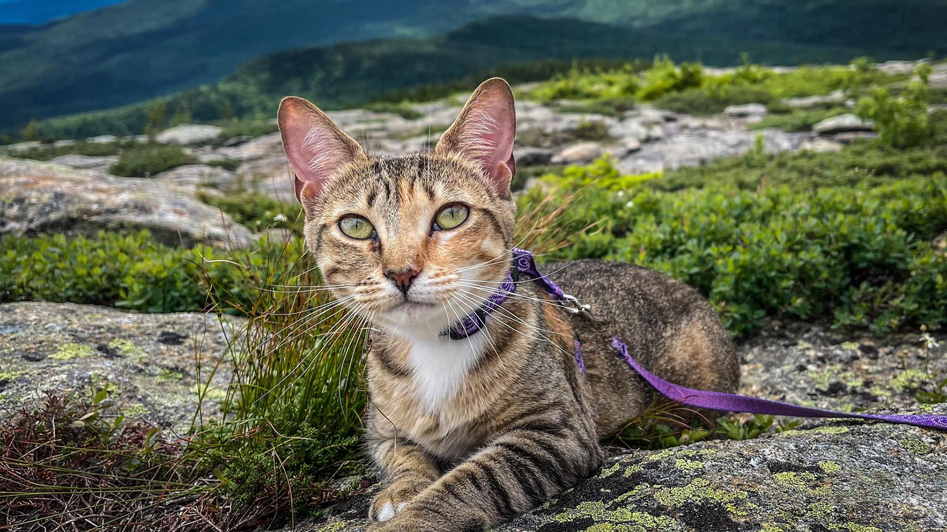 Floki, a hegymászó cica