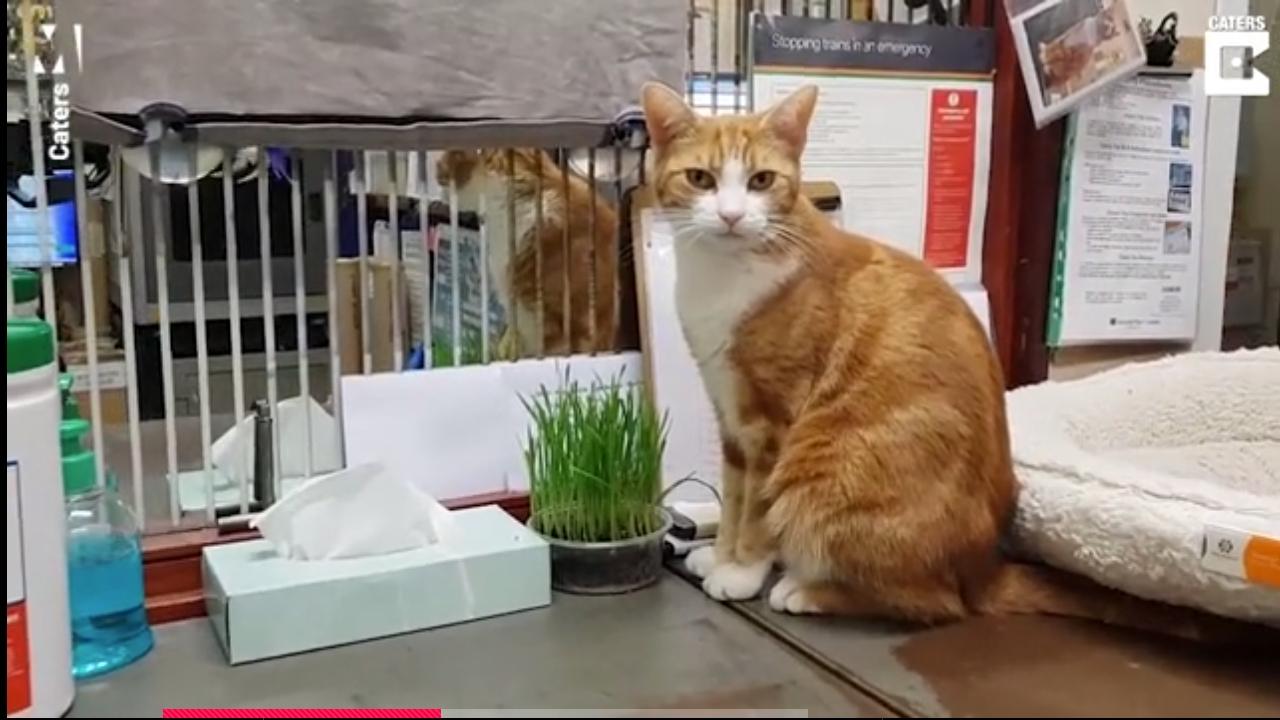 Főegerészként dolgozik George, a macska egy vasútállomáson