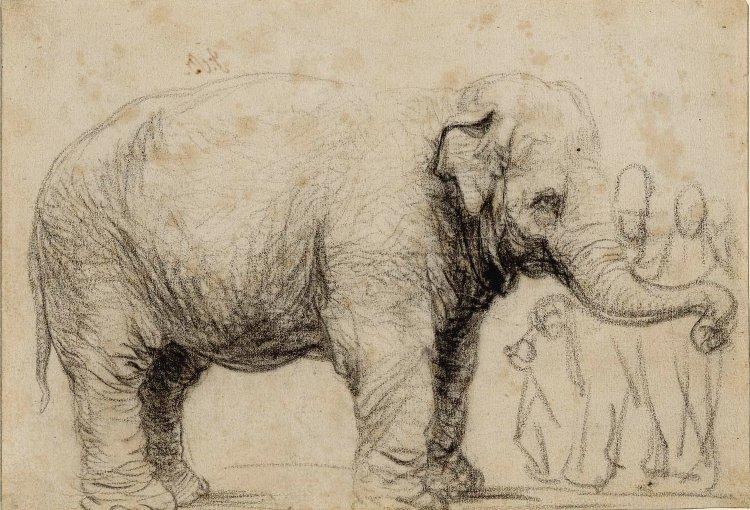 Rembrandt egyik vázlata az elefántról (forrás: Wikipedia)
