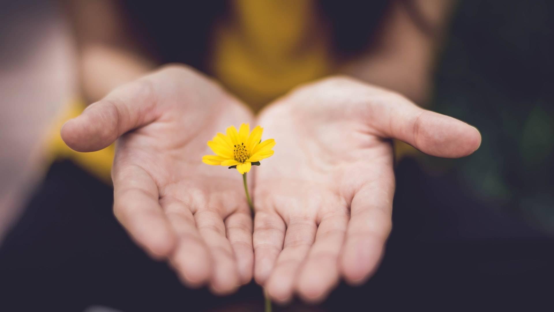 adakozó tenyerek sárga virággal