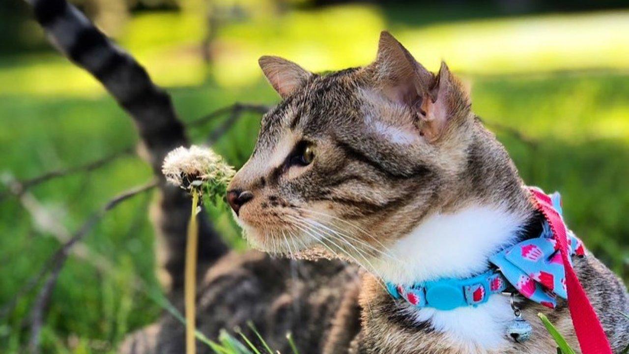 Aslan, a négyfülű macska