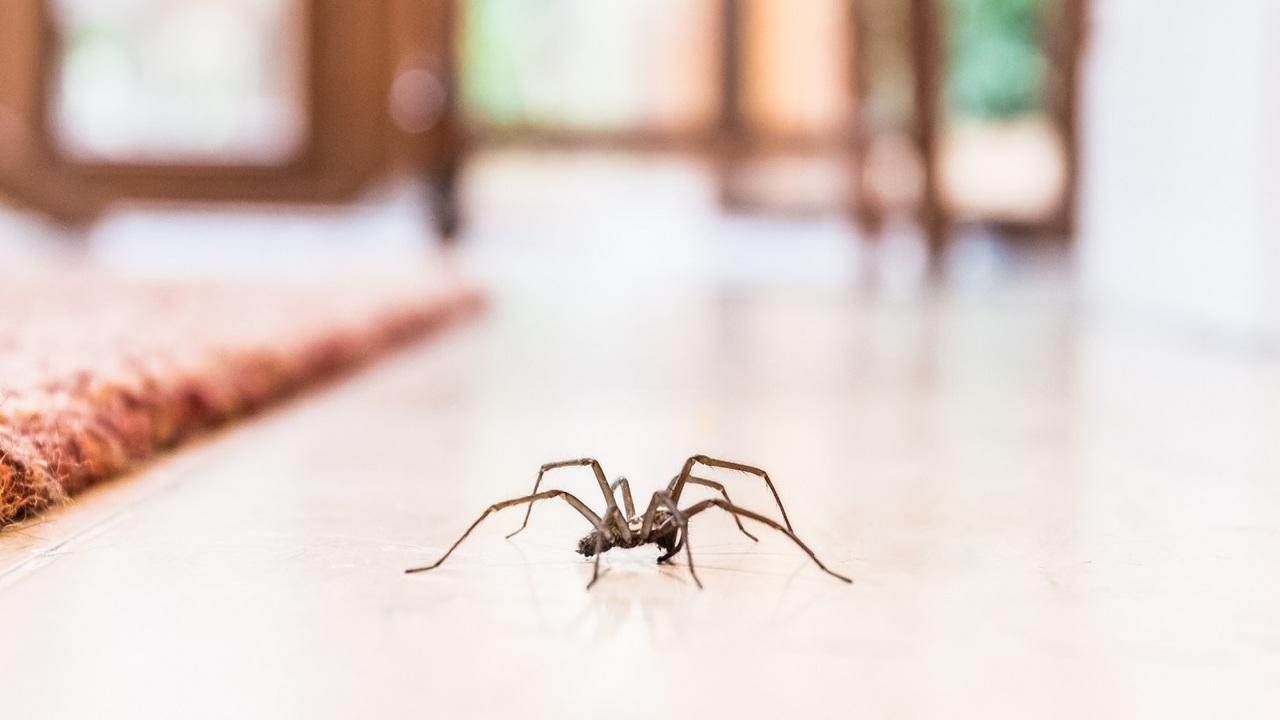 Pókok elűzése otthonról