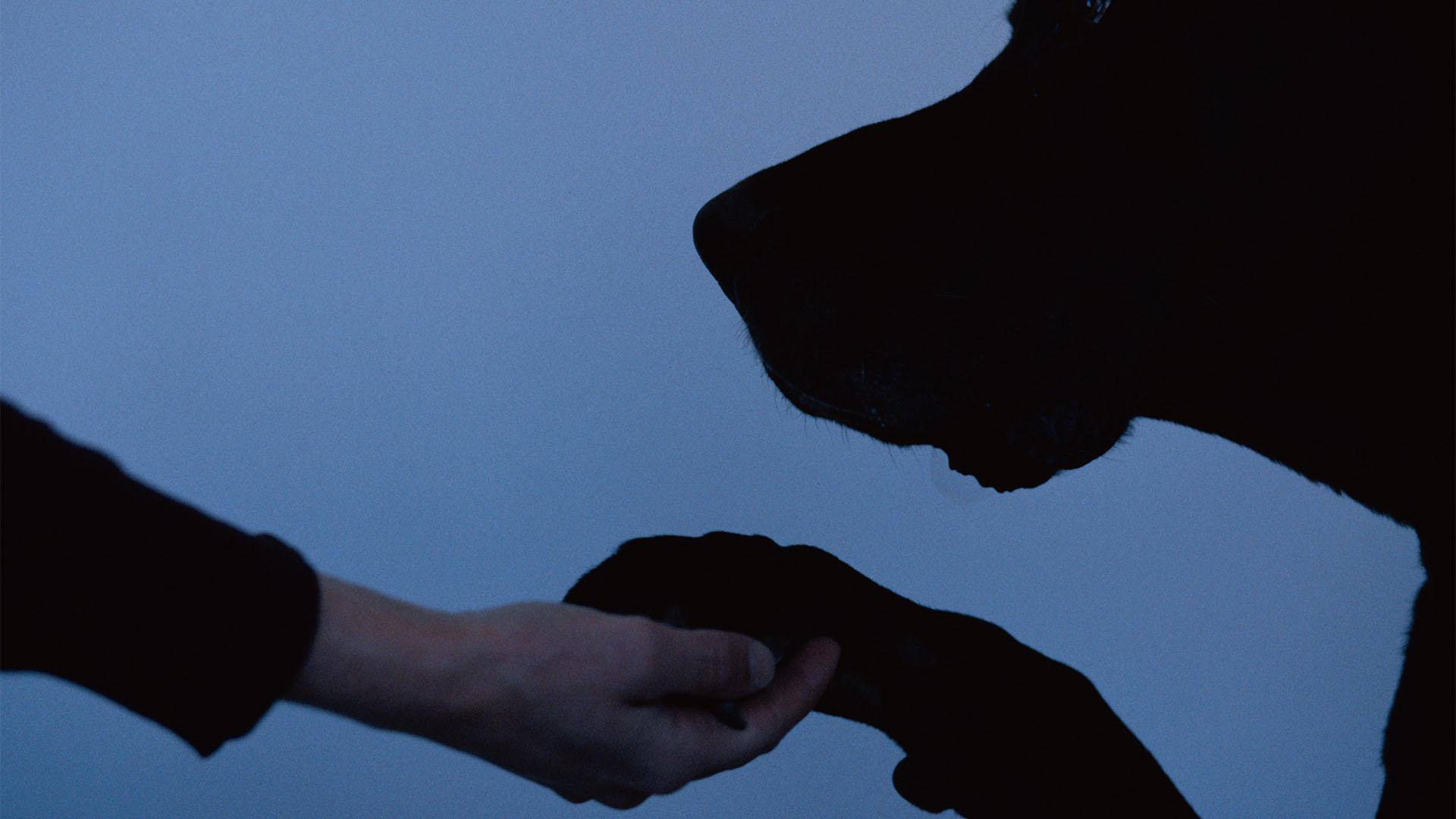 Gazdája után szökött a munkahelyére a hűséges kutyus