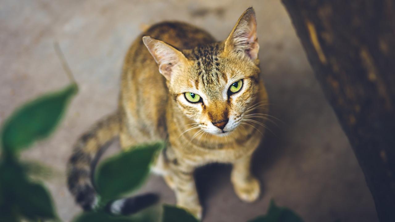 52 napig élelem nélkül rekedt egy házban, mégis túlélte a cica
