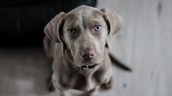 állatkínzás, kutya