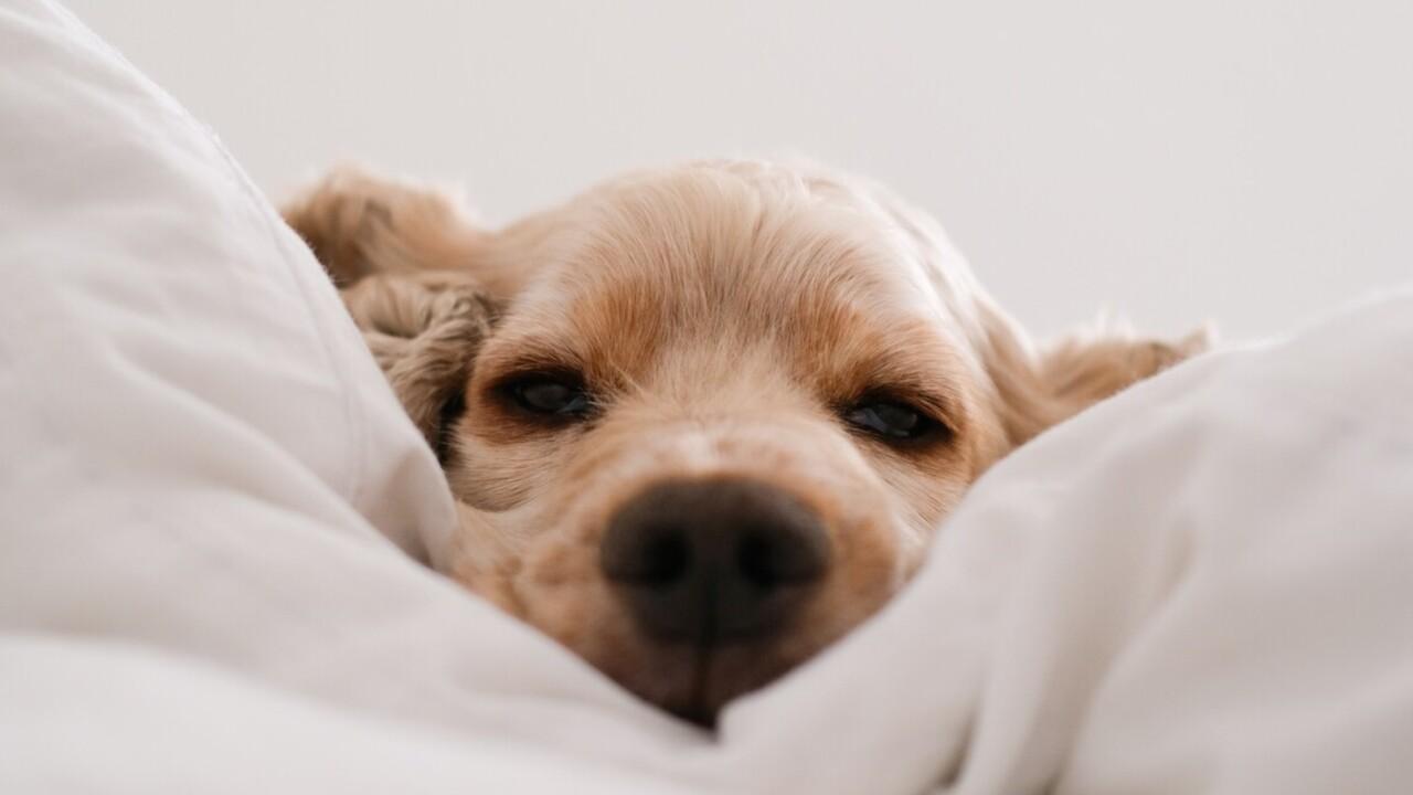 Jobban alszanak kutya, mint férfi mellett a nők