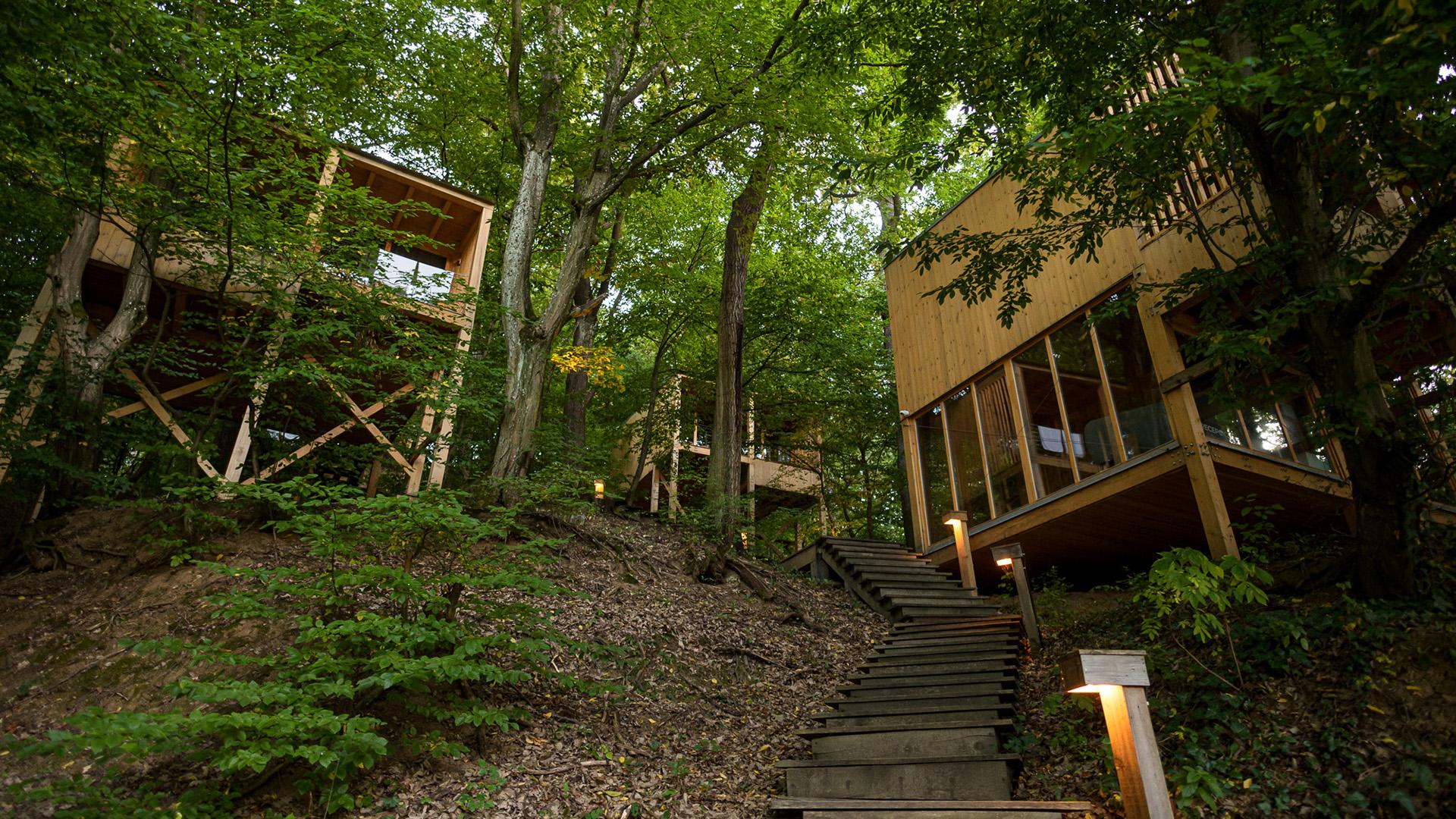 A Treehouses Noszvajon