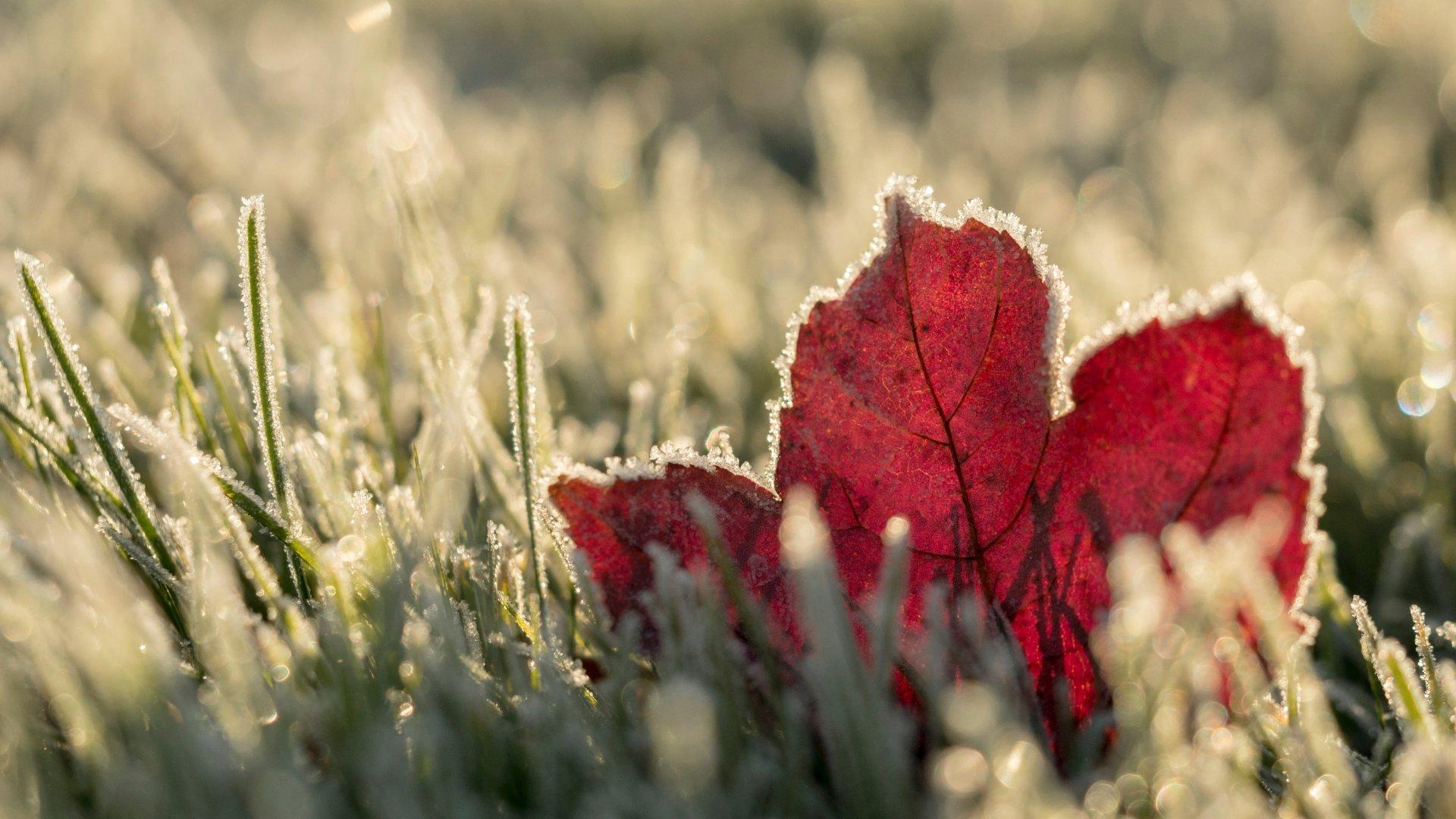 Fagyos ősz, deres falevél
