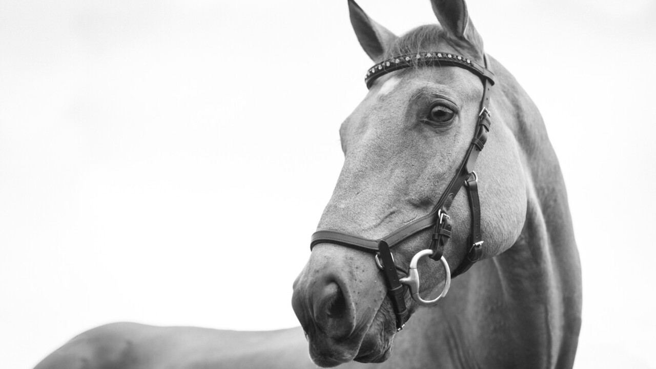 Egyre többen választják Amerikában a lovasterápiát a mentális zavarból való gyógyuláshoz