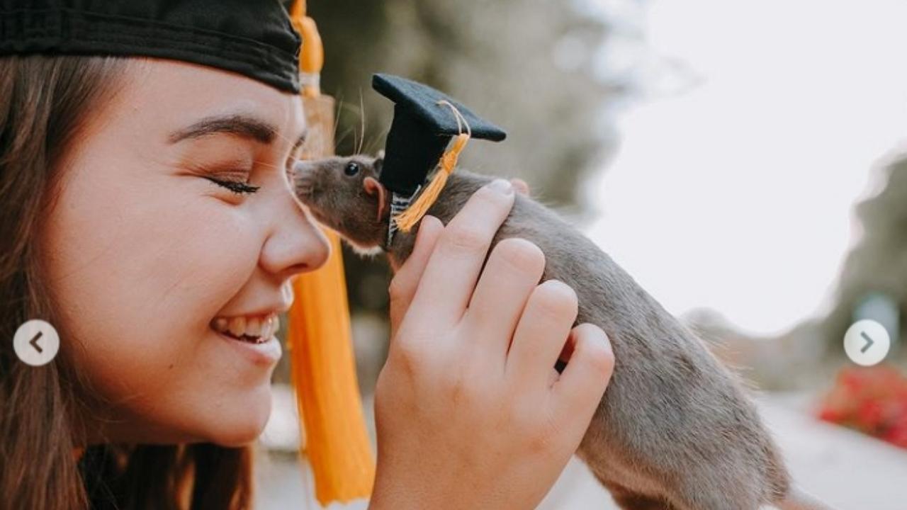 Ez a patkány is megérdemelte a diplomát