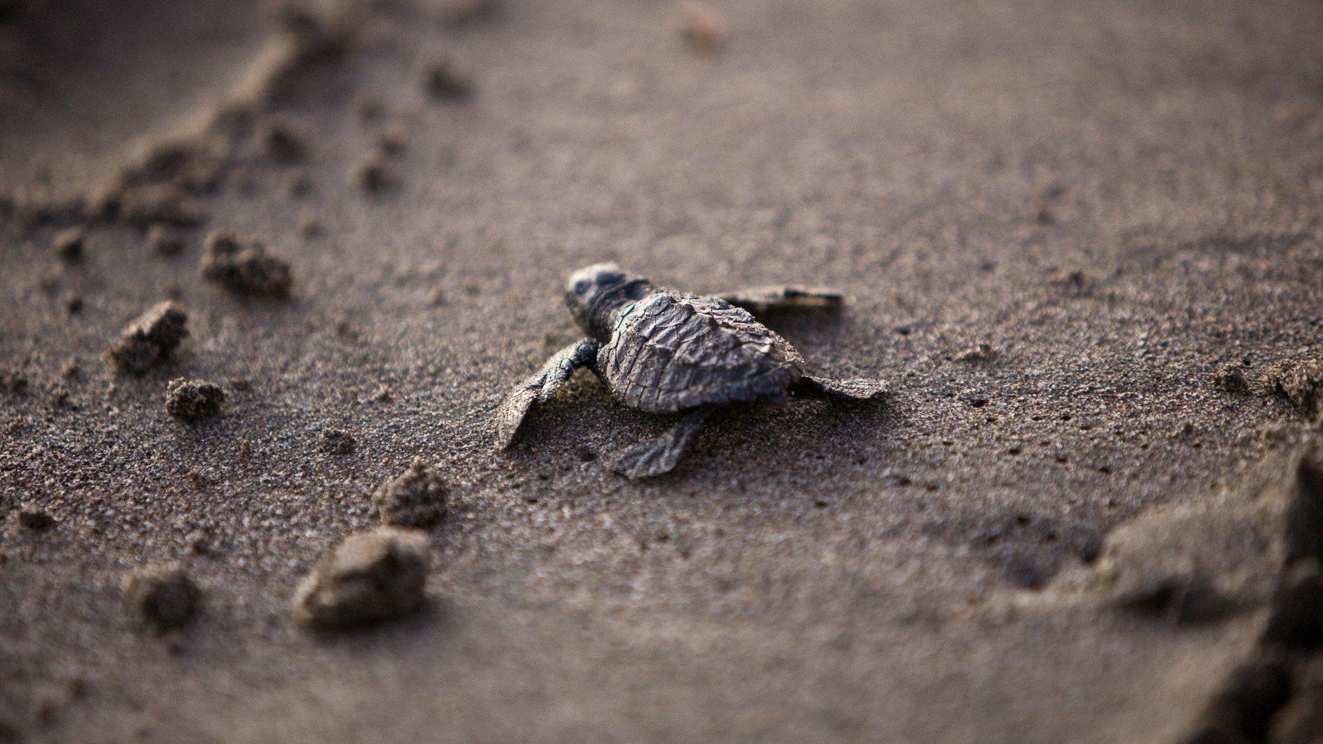 Teknősbébi